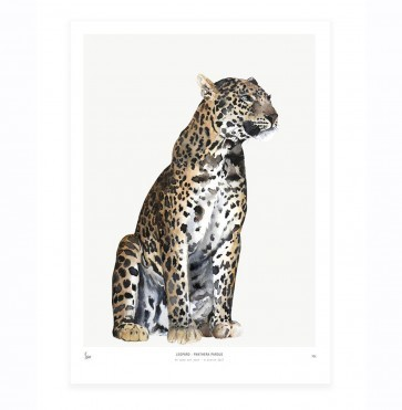 Art Print Leopard - Into the Wild