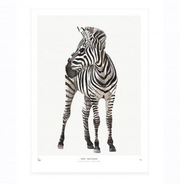 Art Print Zebra - Into the Wild