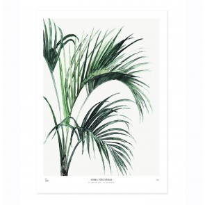 Art Print Howea - Botanics