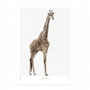 Art Print Giraffe - Into the Wild