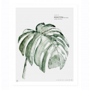 Art Print Monstera - Urban Botanics